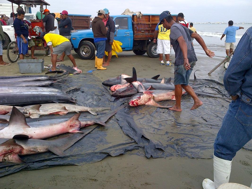 Manta boat builders manta ecuador tours for Fishing in ecuador